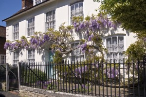 English cottage with wisteria